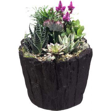 Succulent Flowerpot