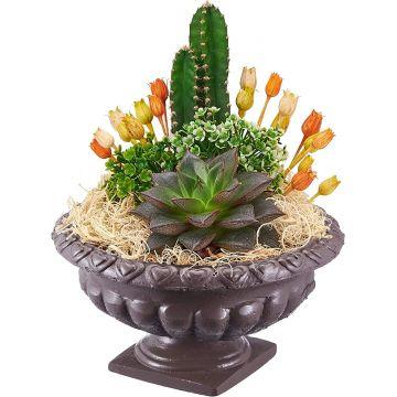 Versay Succulent Flowerpot