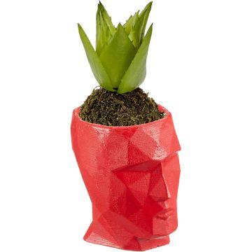 Face Succulent Flowerpot